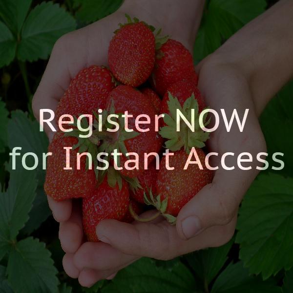 Gedichte Und Geschichten Über Erdbeeren
