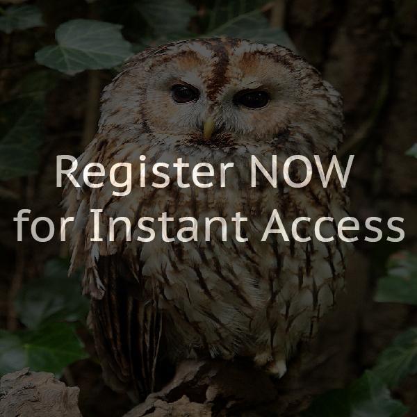 Owl Forum Osnabrück